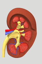 Diabetes - Kidney Damage